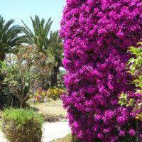 Üppige Blütenpracht im mediterranen Garten