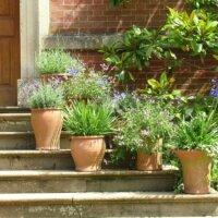 Pflanzen in mediterranen Pflanzkübeln