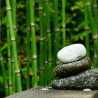 Auch Bambus eignet sich hervorragend der Ufergestaltung.