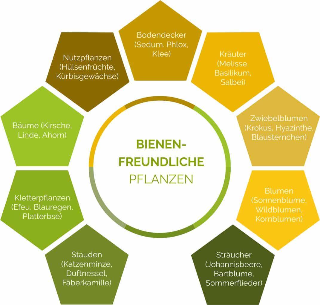 Auswahl an besonders bienenfreundlichen Pflanzen für Ihren Garten oder Balkon.