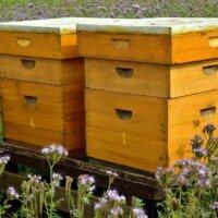 Bienenstöcke sind überlebenswichtig für Bienen.