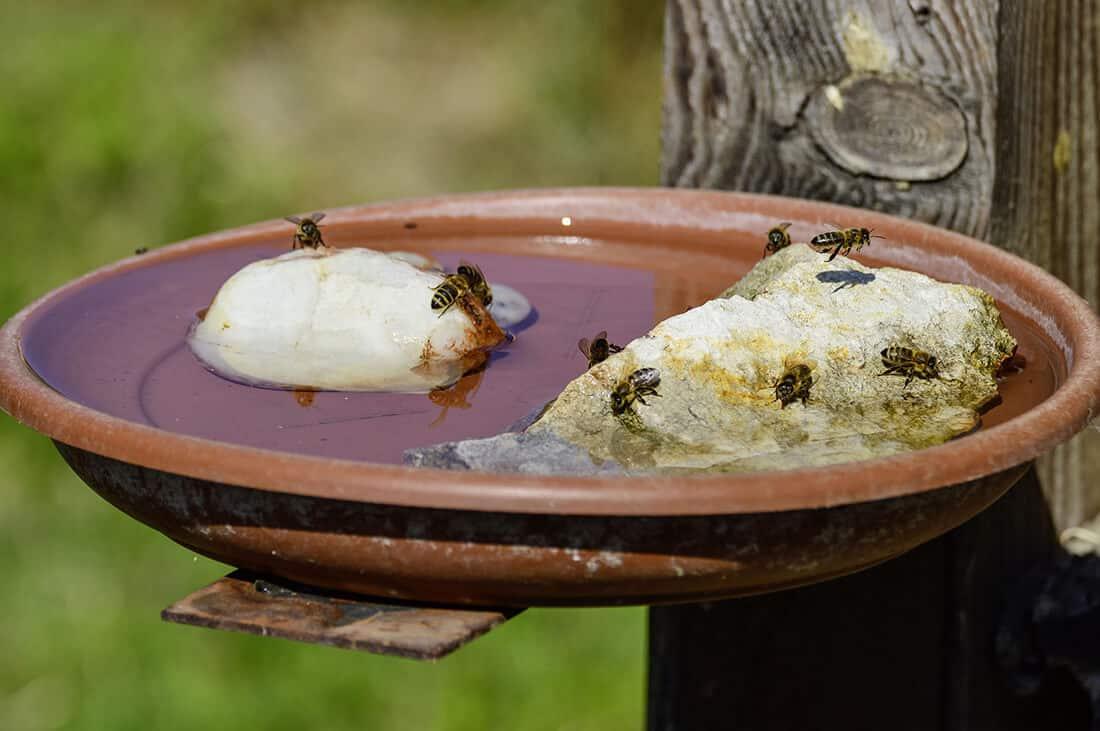 Tränke für Bienen