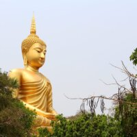 XXL-Buddha in Gold