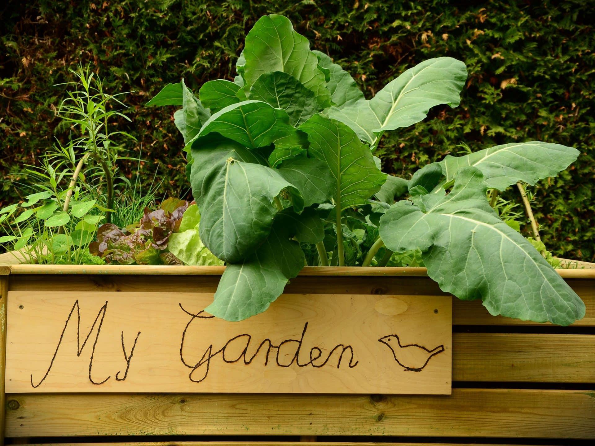 Ein Hochbeet ist nicht nur nützlich, sondern wird oft auch als Gartendekoration gesehen. © Pixabay.com