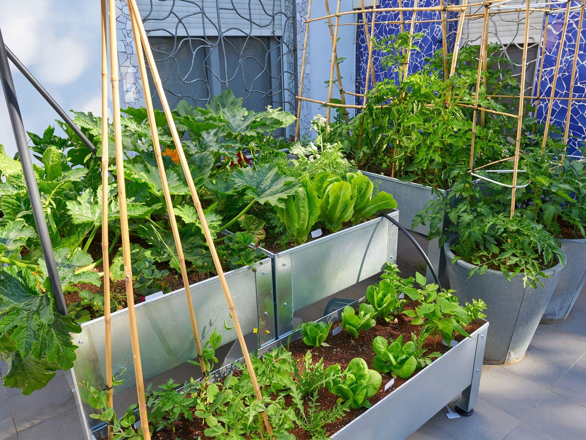 hochbeet_metall_urban_gardening_gemuese