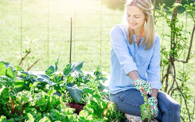 Hochbeet selber bauen  befüllen & bepflanzen
