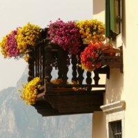 Geranien auf Balkon