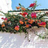 Mediterraner Balkon mit bunten Kletterpflanzen