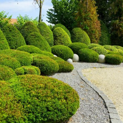 Kiesgarten mit dichten, kugelförmigen Büschen © Shutterstock.com - pixel creator