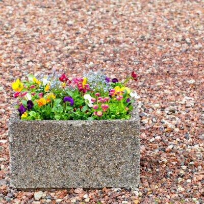 Pflanztopf auf einem Kiesbett © Shutterstock.com - Mikhail Pankov