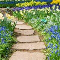 Gartenweg mit Trittflächen aus Naturstein durch ein Blumenbeet © Shutterstock - Neirfy