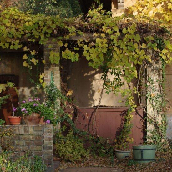 Eine Pergola entfaltet Ihr Potenzial erst richtig mit Kletterpflanzen © Pixabay.com