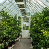 Üppig bepflanztes Gewächshaus