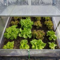 Mini-Gewächshaus mit Salat