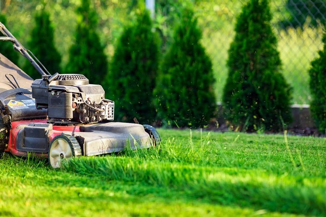 Rasen nicht zu kurz mähen