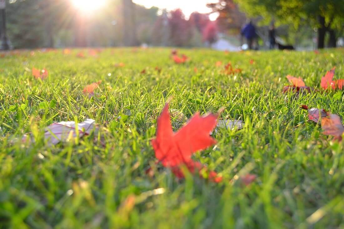 Rasenmähen im Herbst