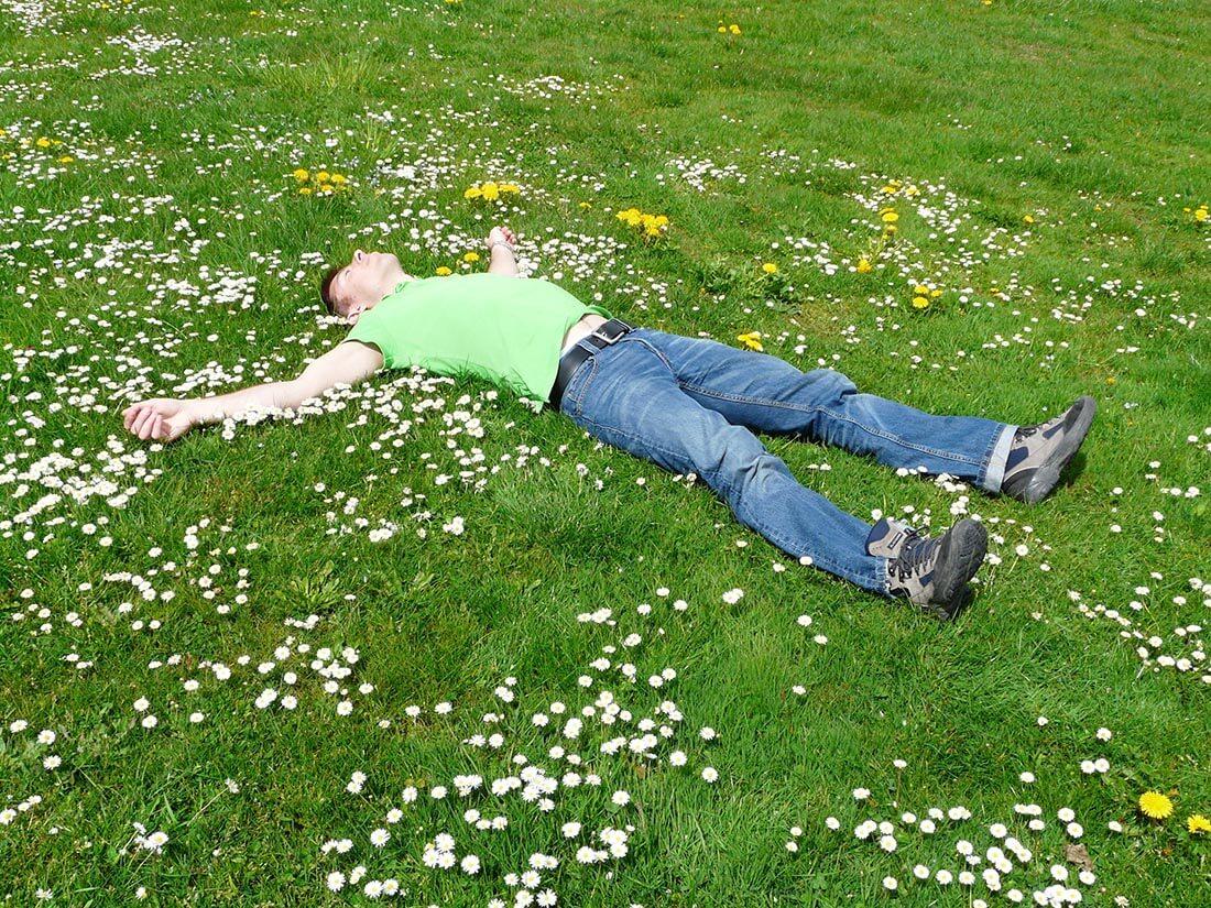 Wilde Blumen auf dem Rasen