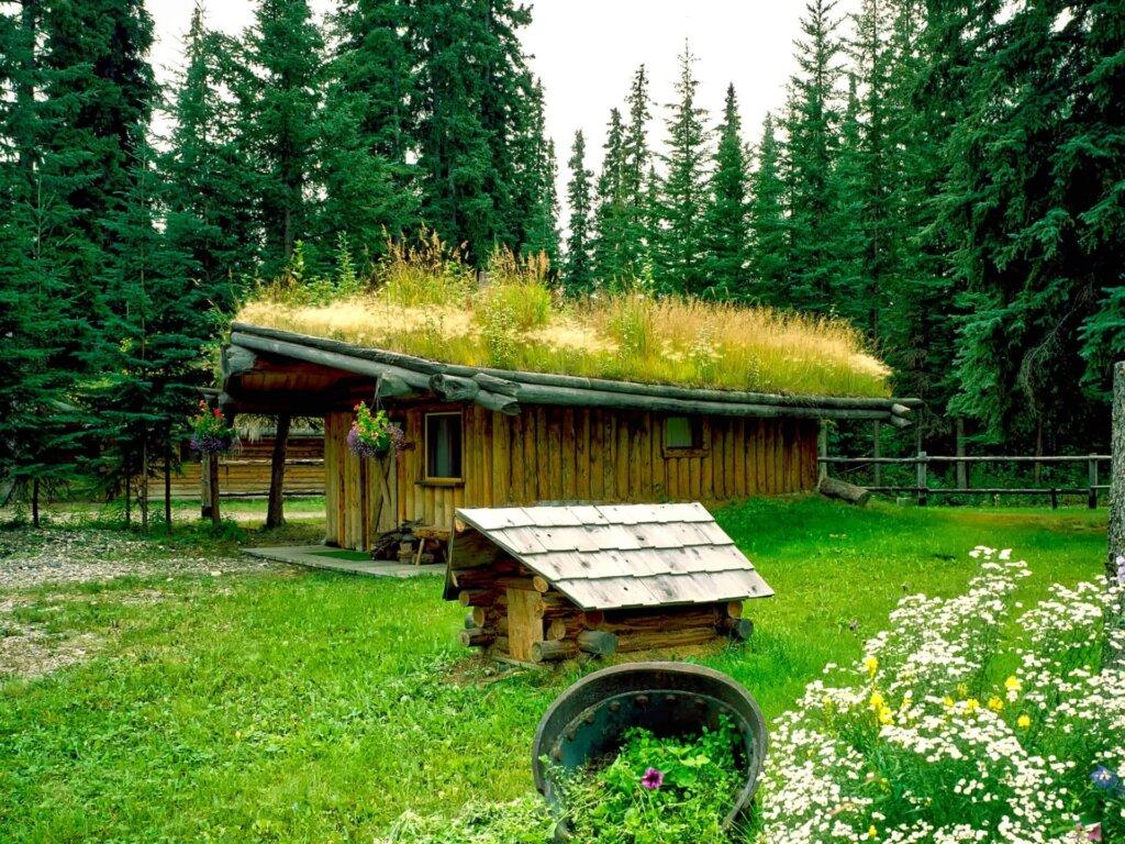 dachbegruenung_extensiv_naturnah_gartenhaus