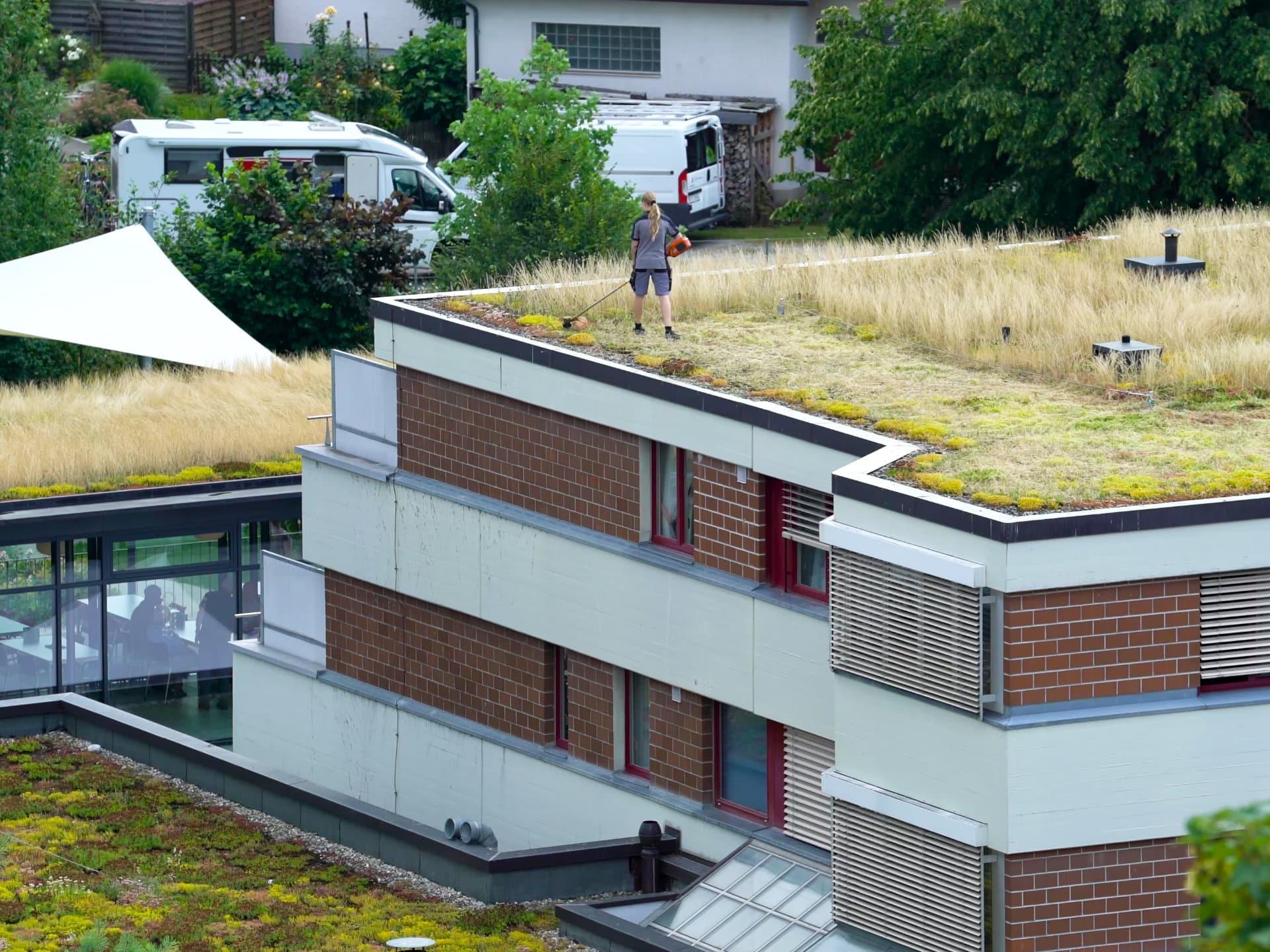 Extensive Dachbegrünung wird nur zur Instandhaltung betreten © Shutterstock.com - Berschauer Joachim