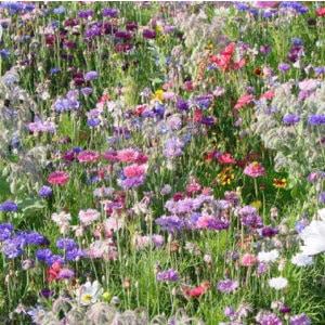 Eine Grafik zu Gartenpflanzen bei Purovivo.de
