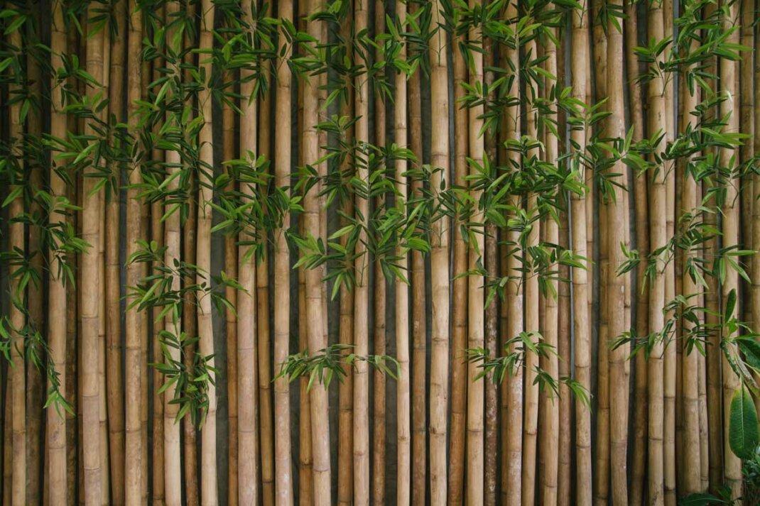 Bambus als asiatischer Sichtschutz