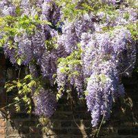 Blaue-Pflanze-Mauer