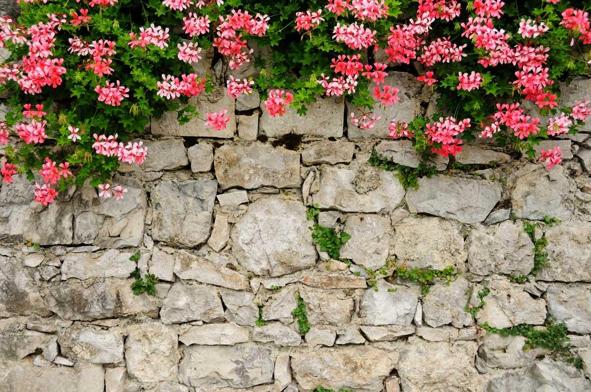 Natursteinmauer mit Kletterpflanzen
