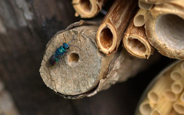 Insektenhotel selber bauen oder kaufen – alle Infos im Überblick