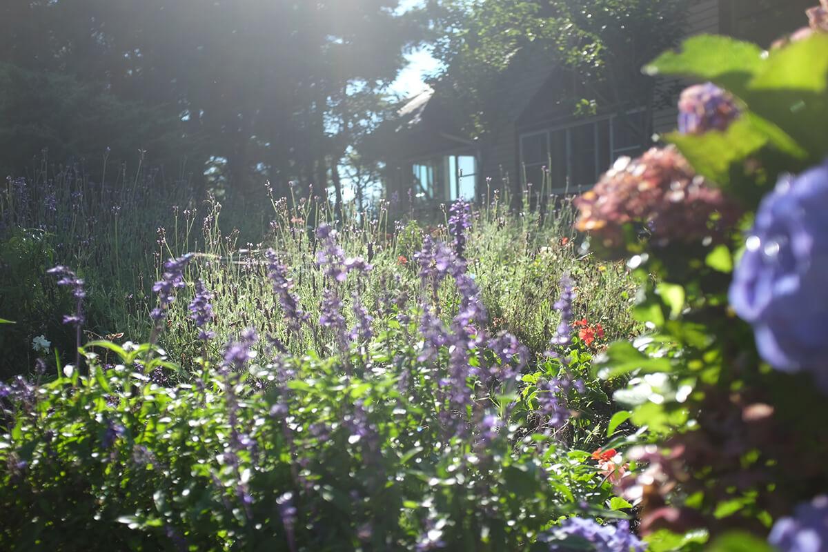 Blühende Pflanzen und Stauden im Naturgarten