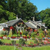 staudengarten-bluehende-pflanzen