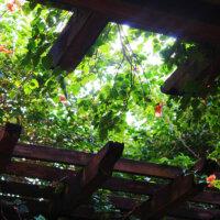 terrassenueberdachung-holz-kletterpflanzen