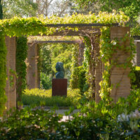 terrassenueberdachung-kletterpflanzen-pergola
