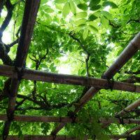 terrassenueberdachung-sonnenschutz-kletterpflanzen