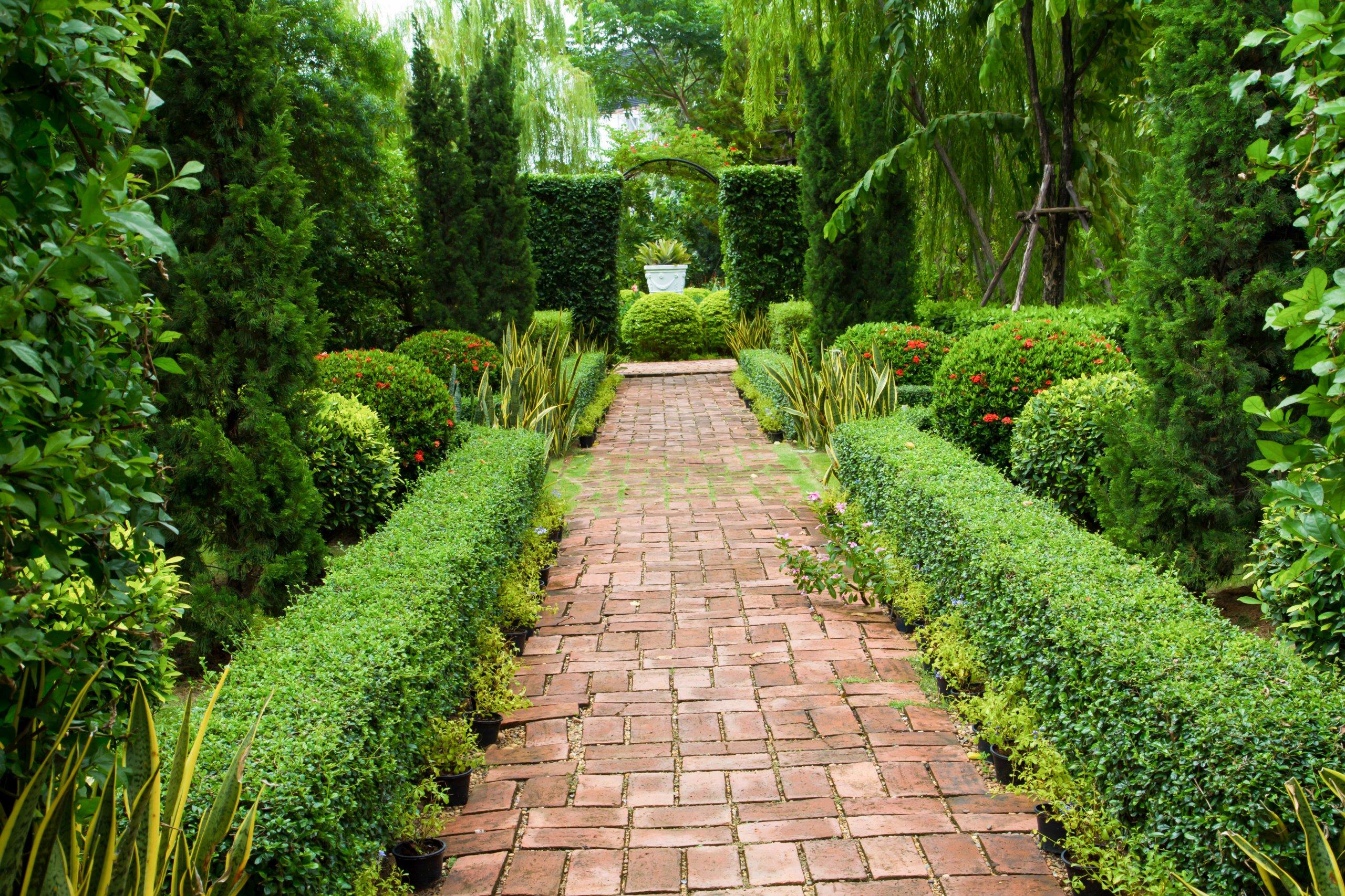 Buchsbaum als Wegrand im Garten
