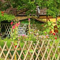 landhausgarten_stockrosen