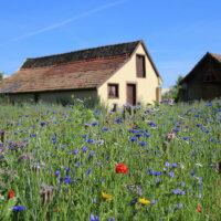 landhausgarten_wildblumenwiese