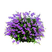Gartenpflanzen ab 1€