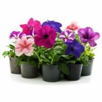 Blumen ab 1 €