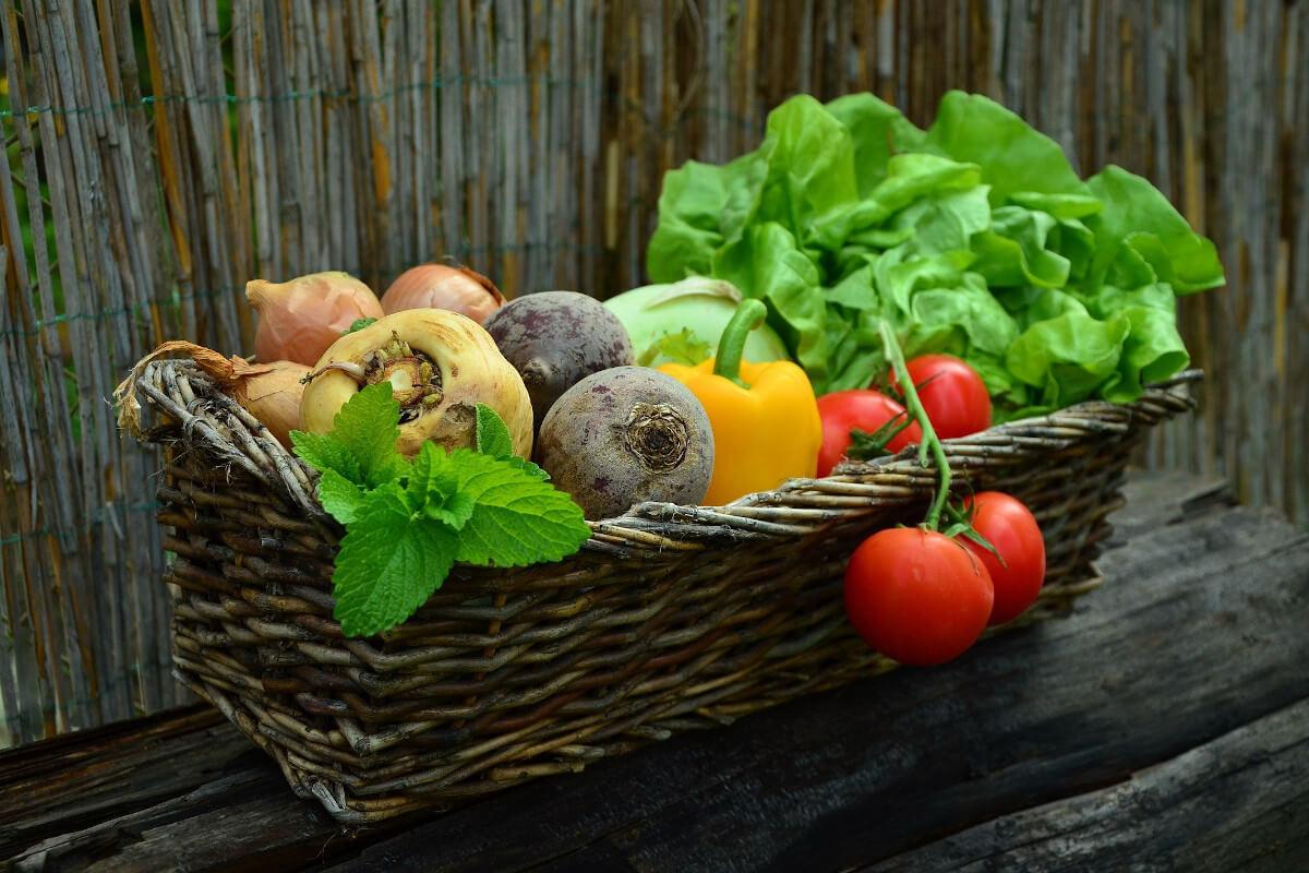 Gemüsebeet Ernte