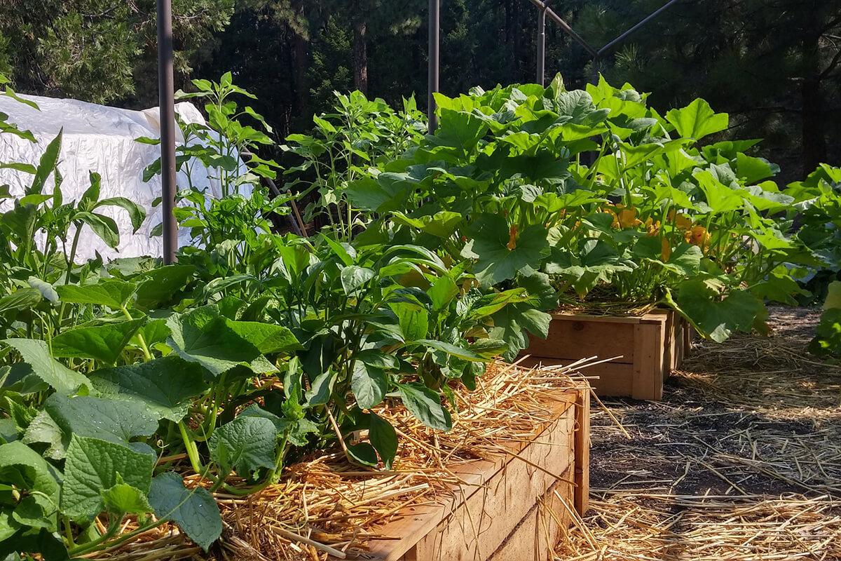 Beete im Gemüsegarten