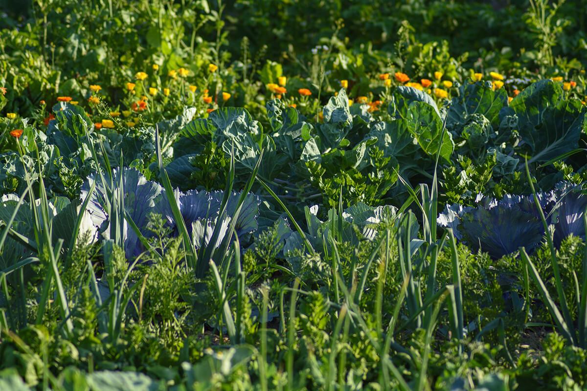 Vielfalt im Gemüsegarten