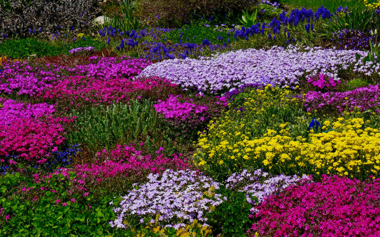 Bodendecker ▷ Die 50 schönsten & pflegeleichtesten Pflanzen