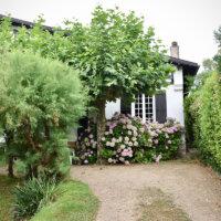 Hortensien am Hauseingang