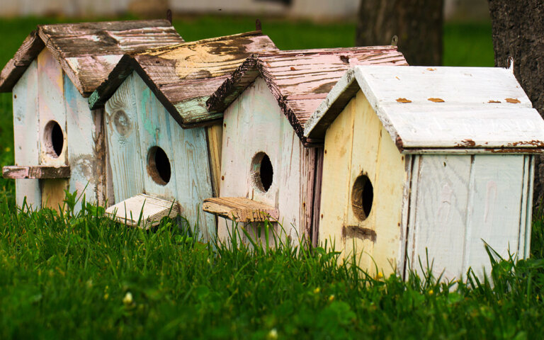 Vogelhaus/Nistkasten selber bauen ᐅ einfache Anleitung + Ideen