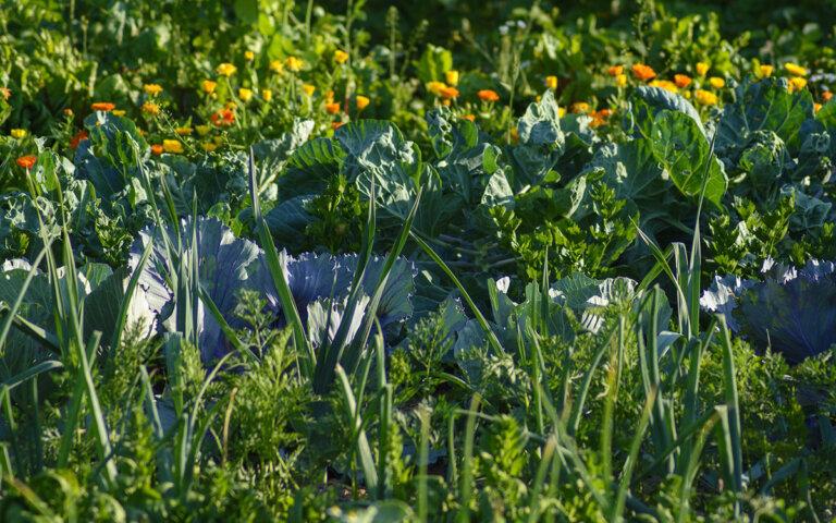 Permakultur & Permagarten anlegen ▷ Garten & Balkon