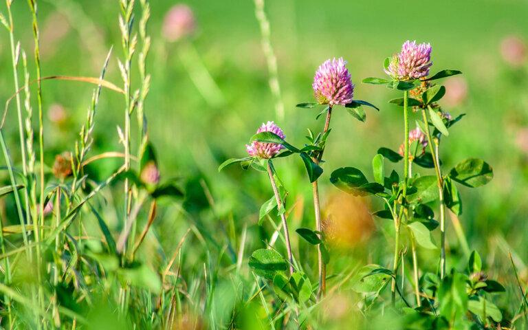Unkraut entfernen & vernichten ▷ Unkräuter in Rasen & Beet