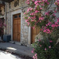 Oleander an einem Hauseingang