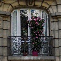 Oleander im Kübel auf dem Balkon