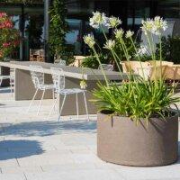 Oleander neben Gartenmöbeln