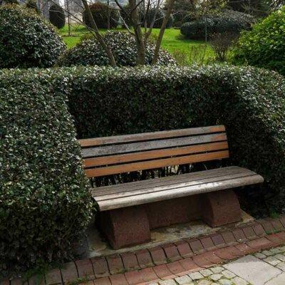 Buchsbaum-Hecke als Umrandung einer Bank